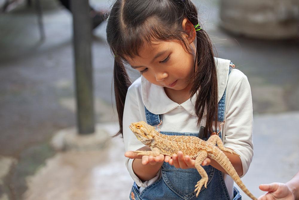 girl holding chamelion at a Preschool & Daycare Serving Tilton, NH